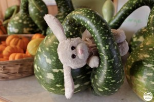 Monorail Bunny Gourd