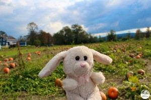 Monorail Bunny at Jubilee Farm
